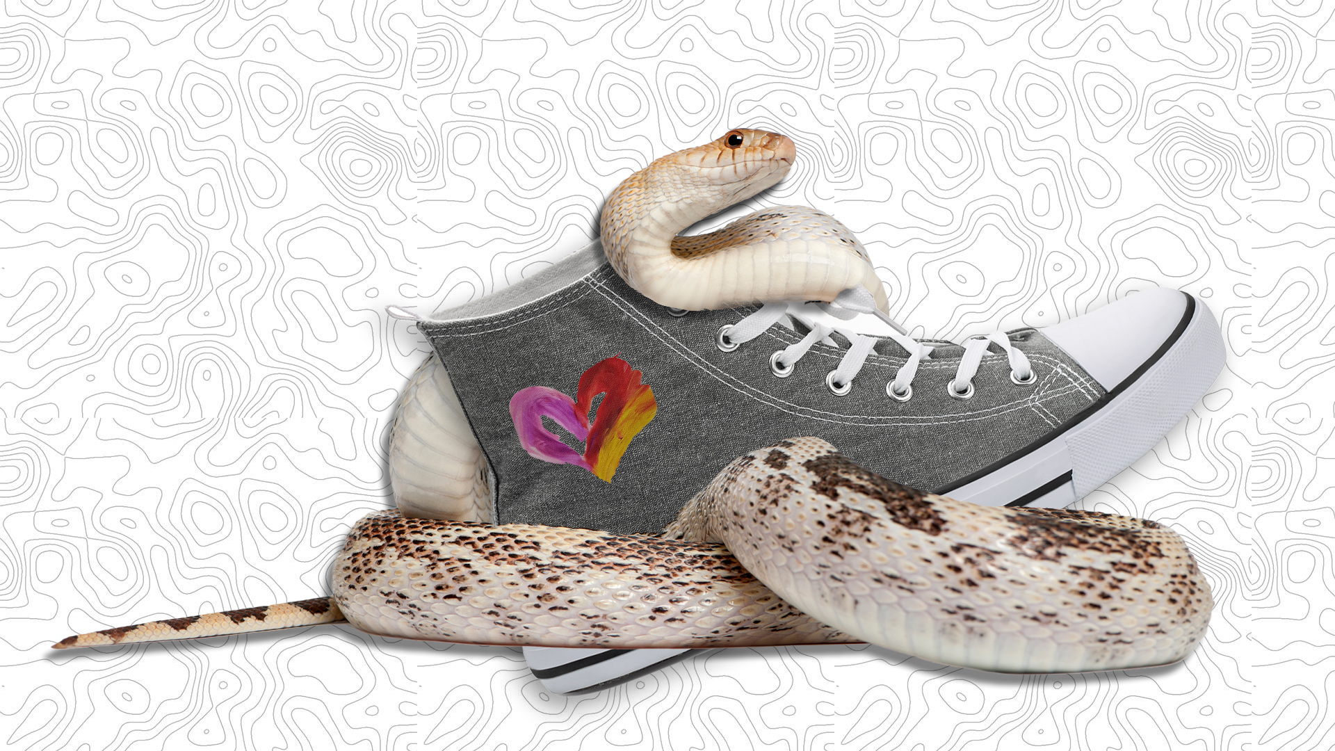 My Snake Has Shoes